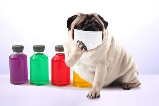 マスク 消毒 菌